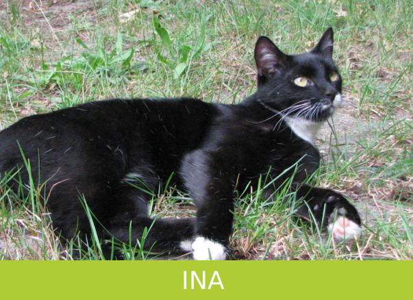 Katze Ina in Hahnenhorn vermisst!